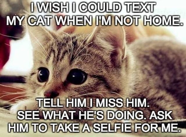Oh how I wish! milomonster myhappy cutekittensofinstagram