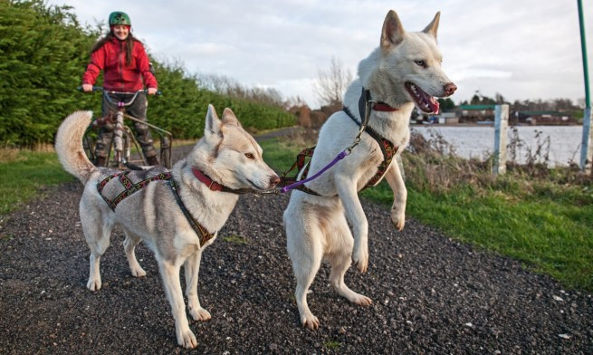 Erica Buist with Husky dogs at Arctic Quest, Tewksbury, Glos.