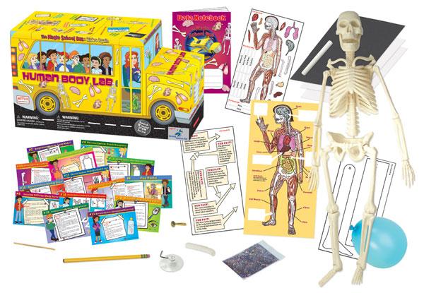 Human Body Lab
