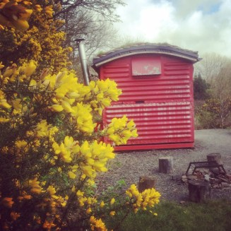 Train Carriage and gorse flowers