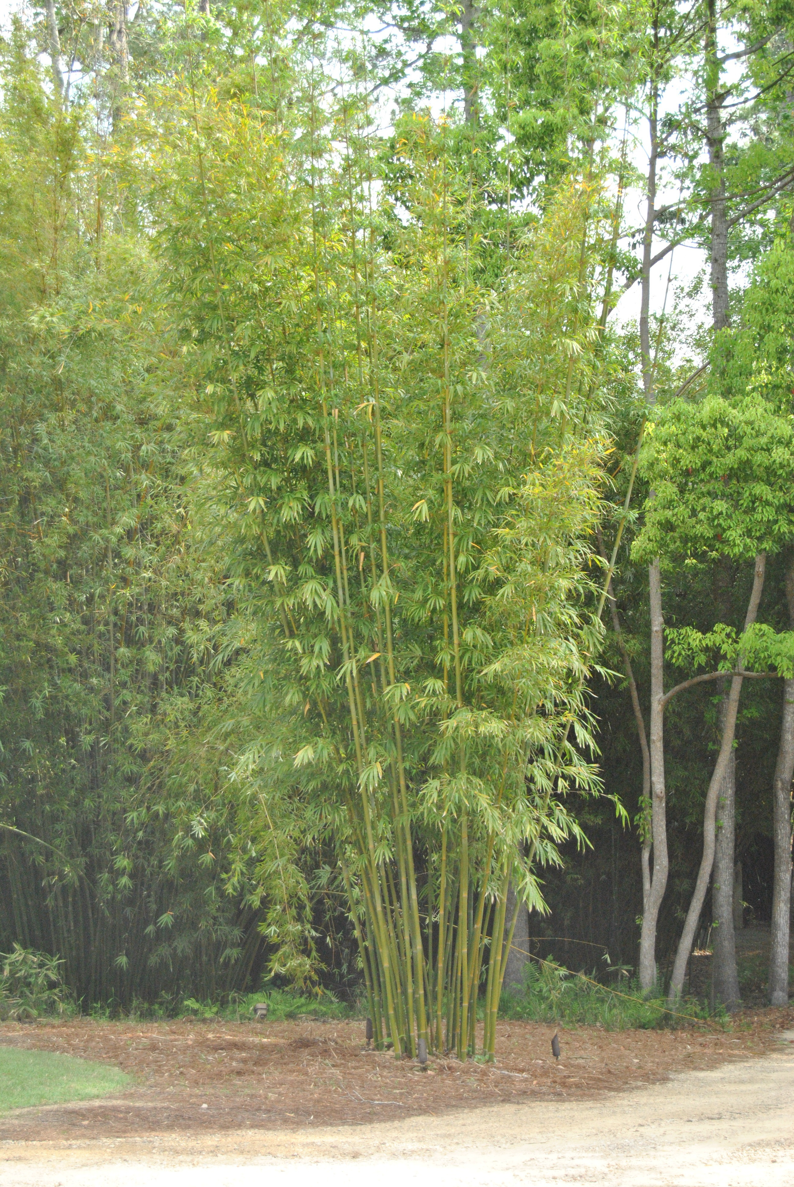 Planters Tropical Trail Mix
