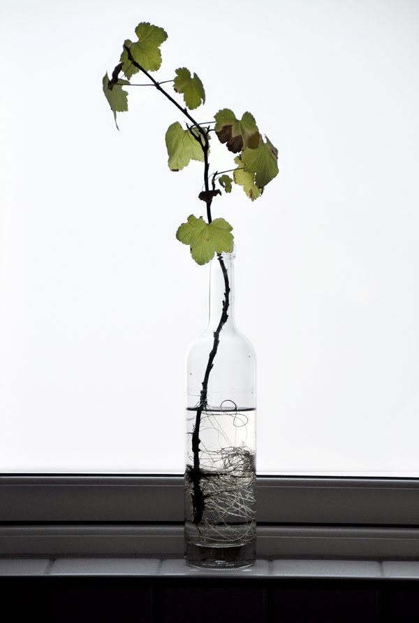 grow plants in water 3