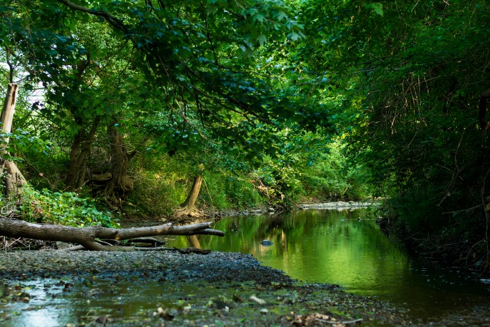 Summertime at the Creek 4 WEB