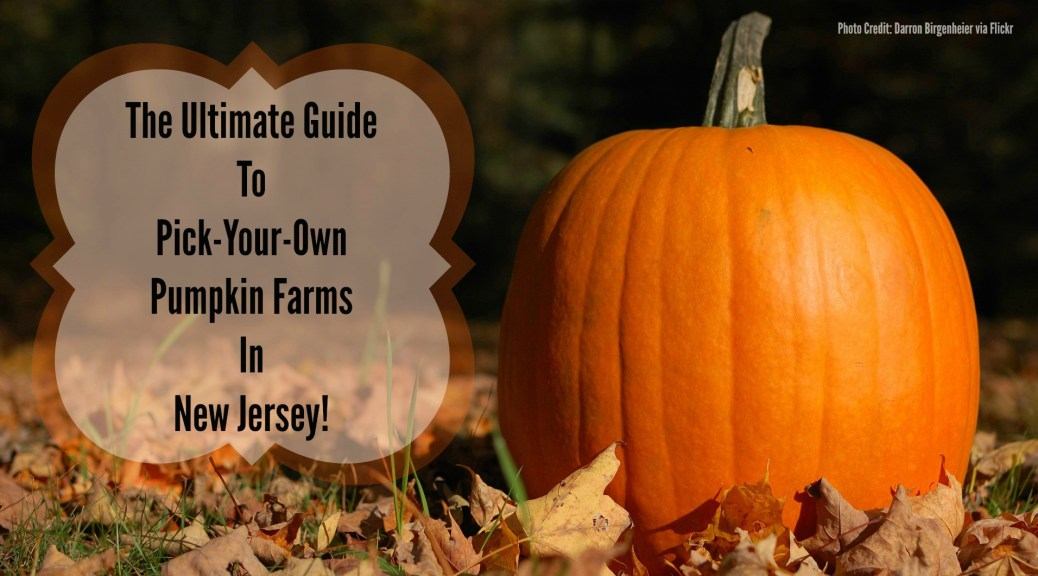 Pumpkin Picking Hayrides In New Jersey Archives Things To Do In