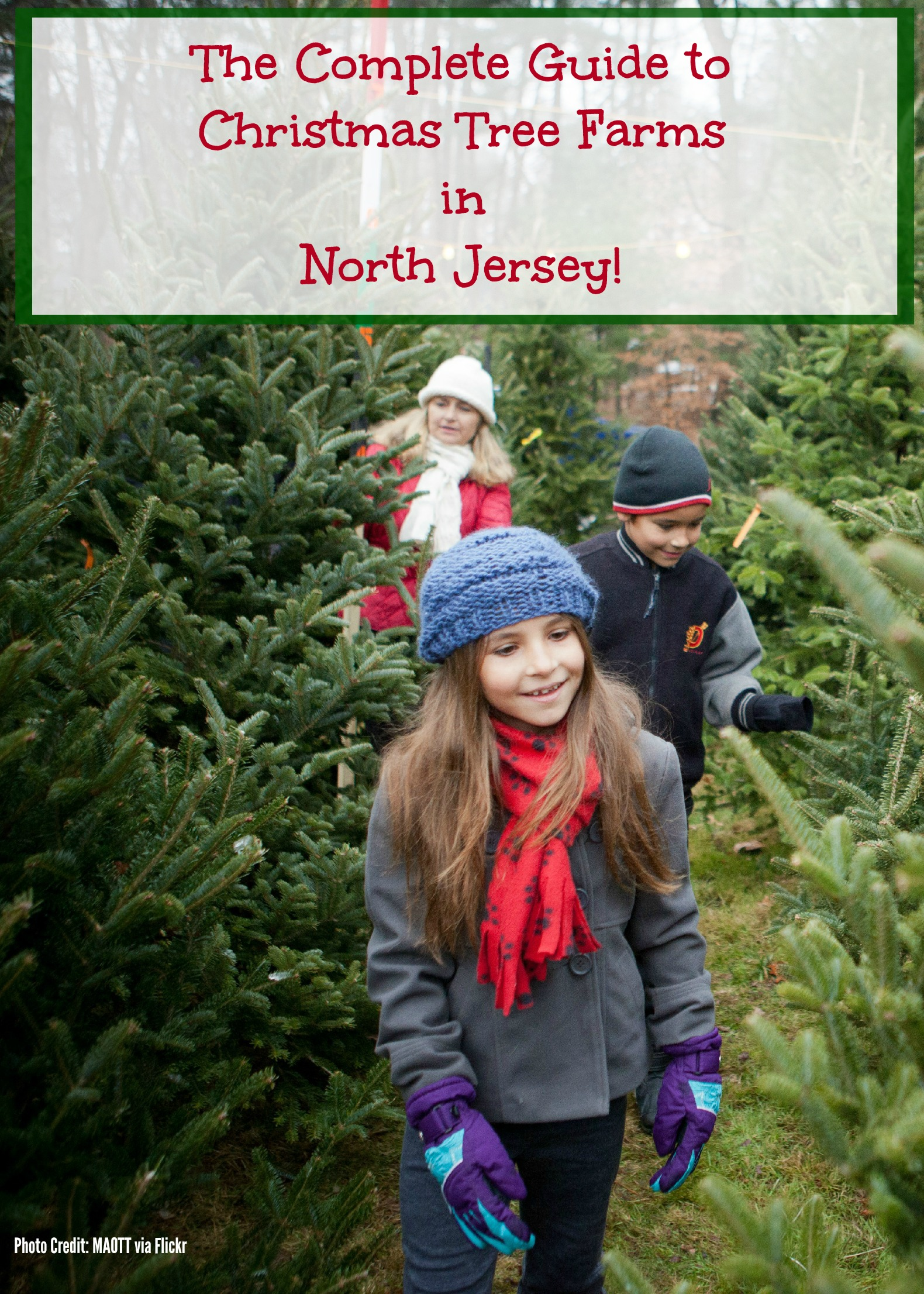 The Complete Guide To Christmas Tree Farms in North Jersey ...