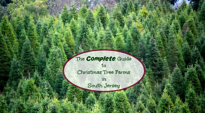 581a93aecef The Complete Guide to Christmas Tree Farms In South Jersey - Things ...