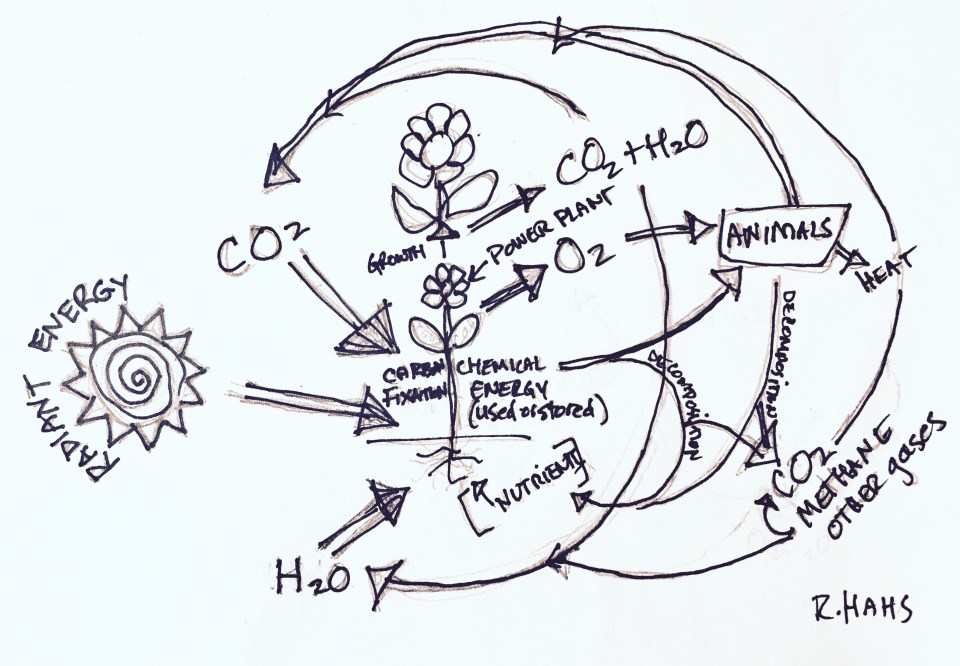 Nature's model