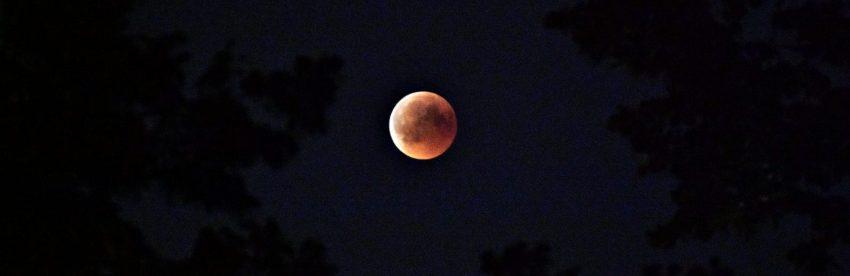 Moonshot - elke maand dividend