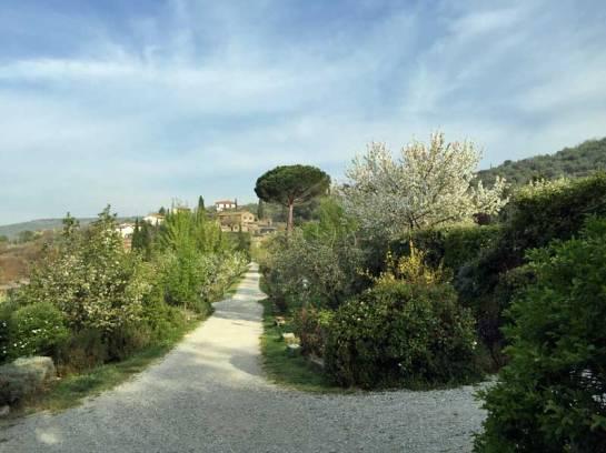 The walkway towards the Baracchi Winery at Il Falconiere.