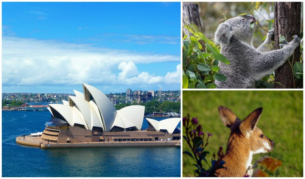Sydney Opera House, Koala and Kangaroo.