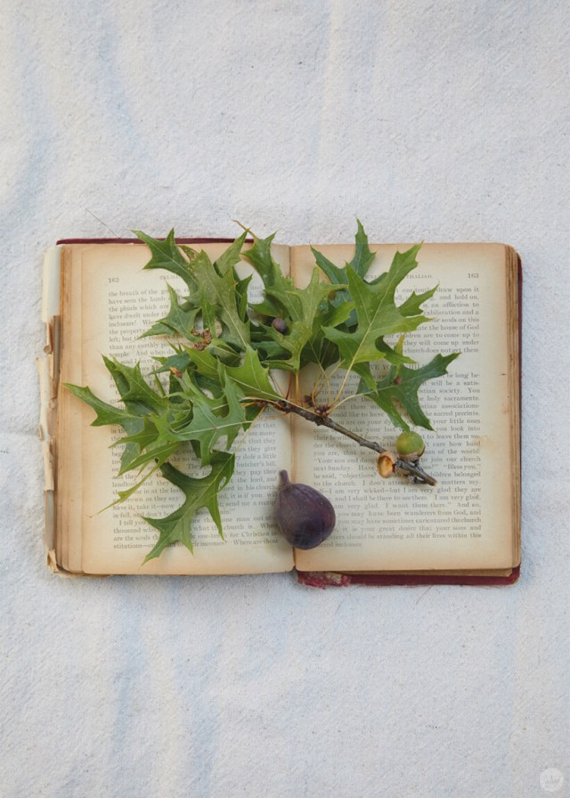 Leaves and a fig on an open book