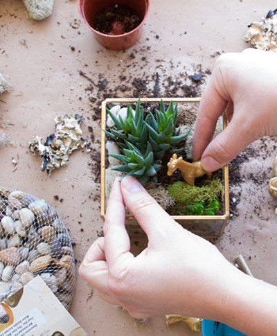Father's Day Terrariums | thinkmakeshareblog.com