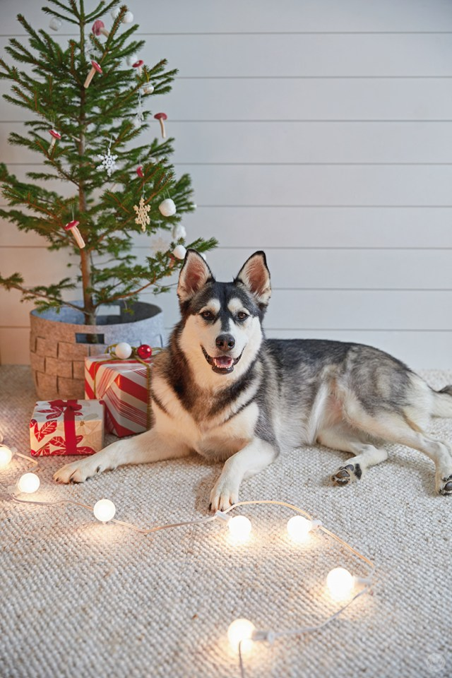 holiday pet photo ideas: pets with strings of lights