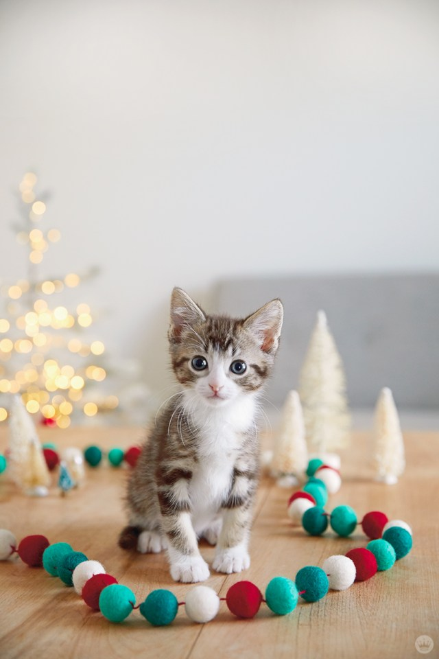 holiday pet photo ideas: pets with strings of things