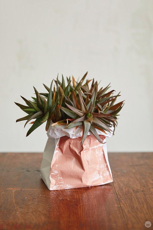 A succulent in a DIY Paper Plant Bag painted pink | thinkmakeshareblog.com