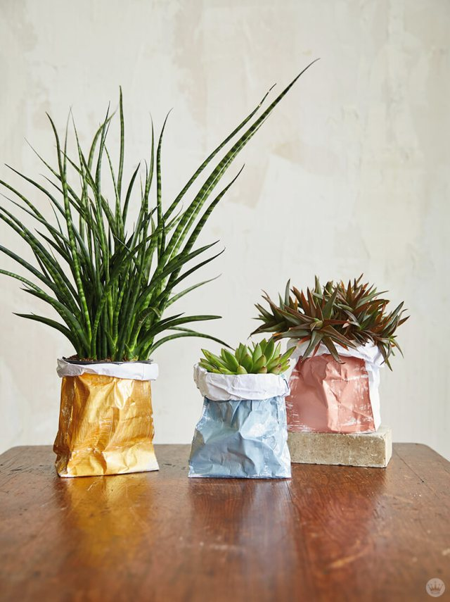 Three house plants placed in DIY Paper Plant Bags | thinkmakeshareblog.com