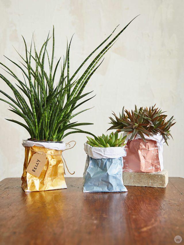 Three plants in the DIY Paper Plant Bags | thinkmakeshareblog.com