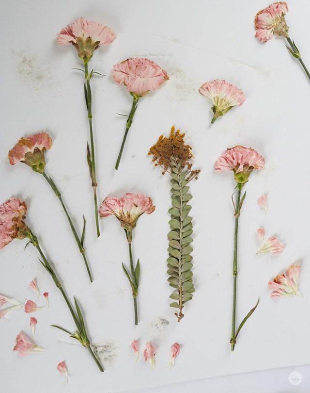 Pressed carnations from a Hallmark workshop