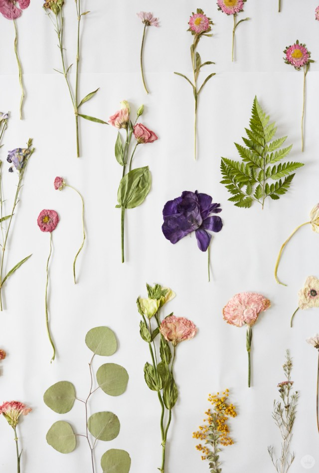 pressed flowers on white background for Mother's Day time together