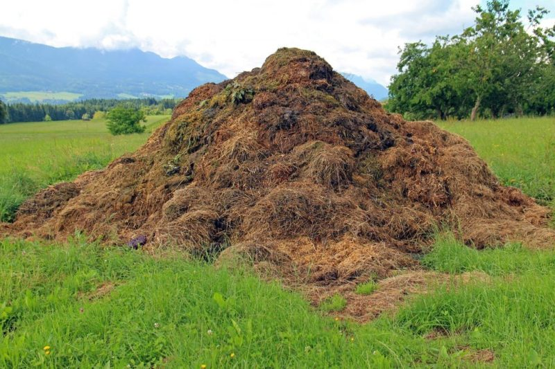 In Malcolm (Jurassic Park)'s voice: That is one big pile of shit.