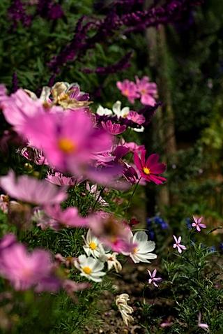近所の花壇