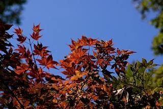 皇子山公園の紅葉