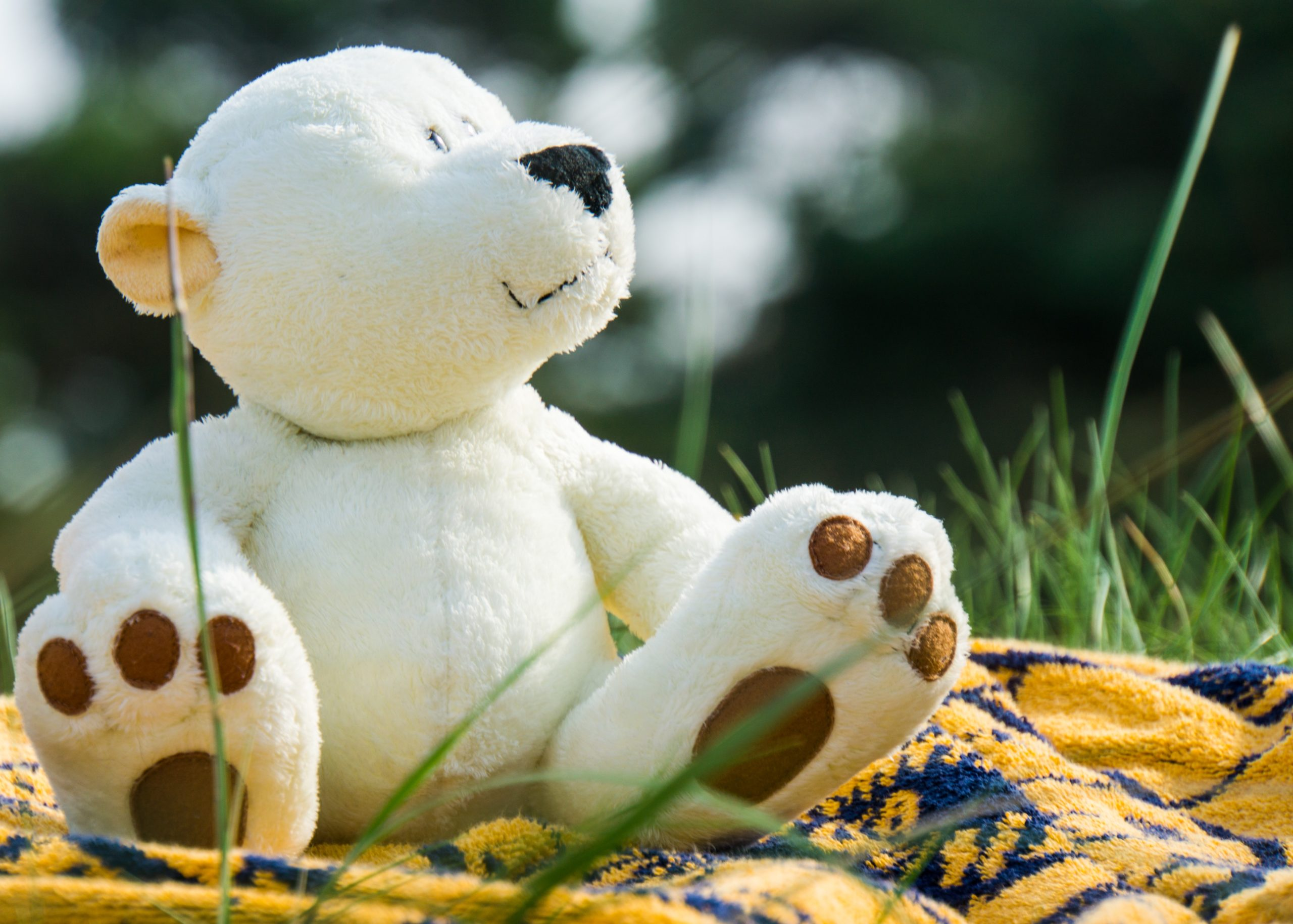 White teddy bear siting on a yellow and blue blanket on grass looking up to the right