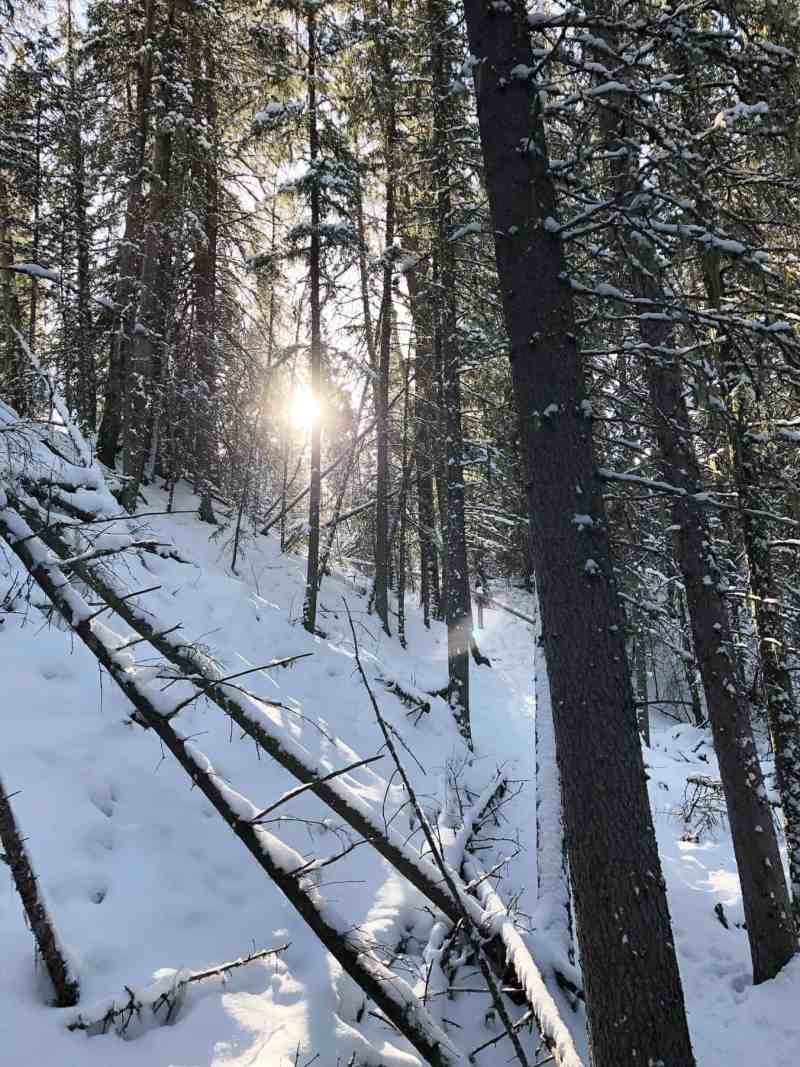 Winter Campfires and Snowshoeing in Bragg Creek