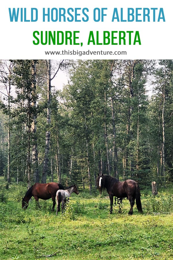 Wild Horses of Alberta Society, Sundre Alberta
