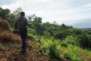 Image of farmer harvesting beans on the side of Volcano Maderas on Ometepe Island in Nicaragua.