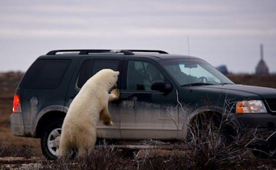 bearcar
