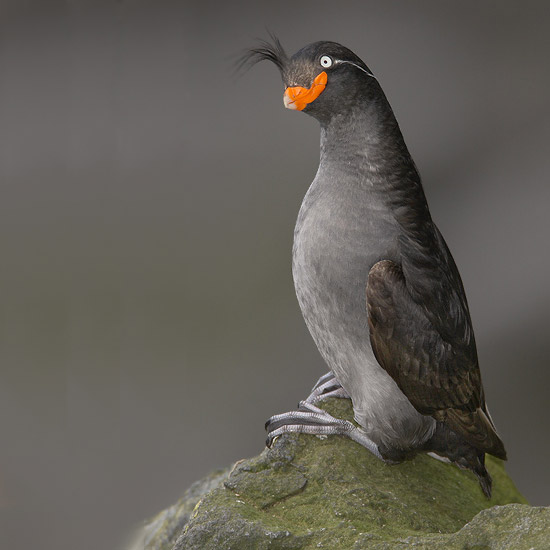 birdlol