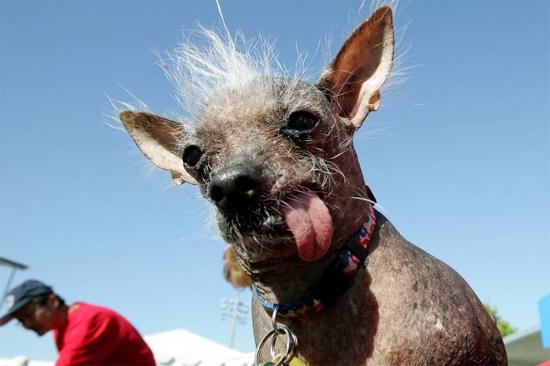uglycutedog