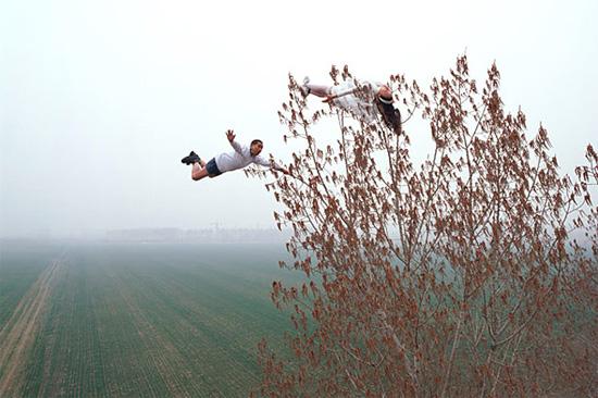 tree-wind