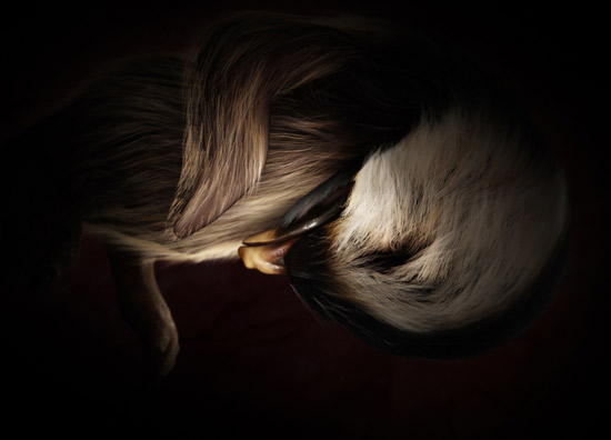 Stunning Photographs Of Animals Inside Womb - 14 incredible photos animals inside womb