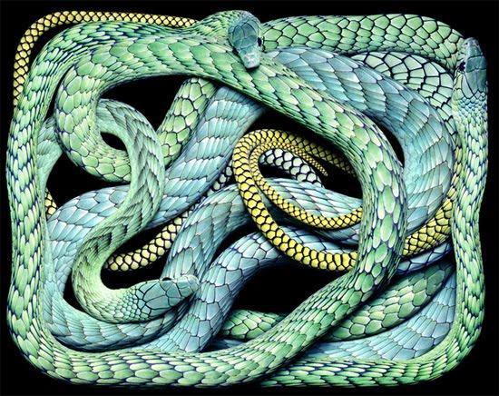 blue-snake