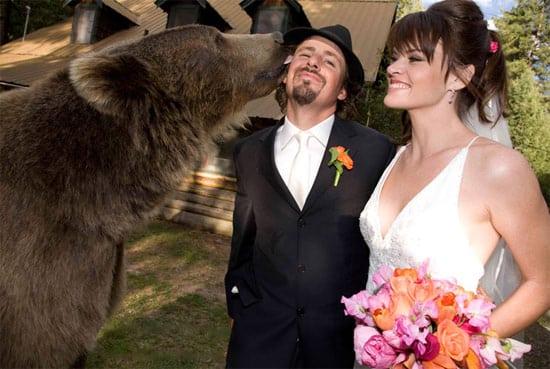 wedding-bear-kiss