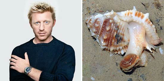 boris-becker-snail