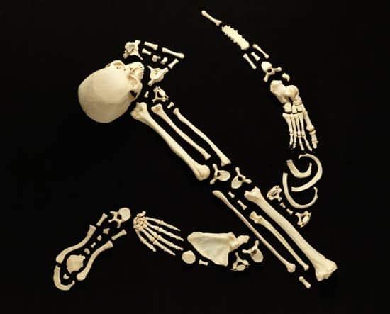 ssssr-bones