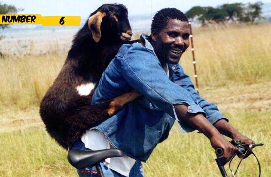 goat-on-bike