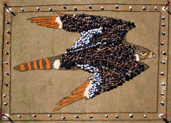 eagle-photo-sky