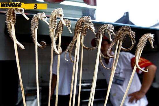 seahorses-food