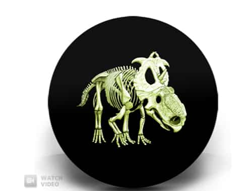 The Silly Dinosaur Coin