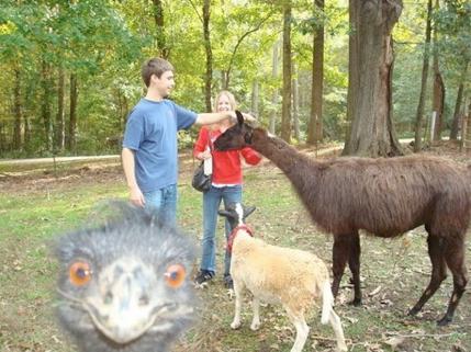 The Best Animal Photobomb