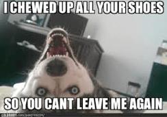 Funniest Dog Memes