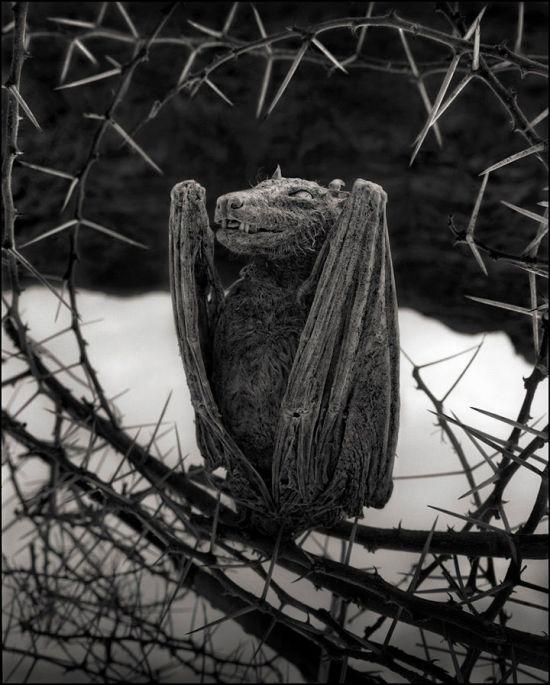 stone_animals_lake_08