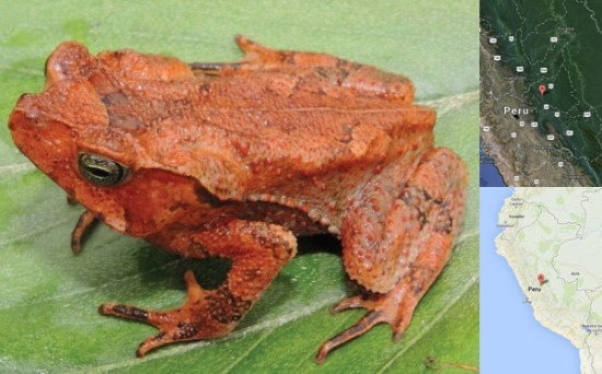 leaf patterned frog