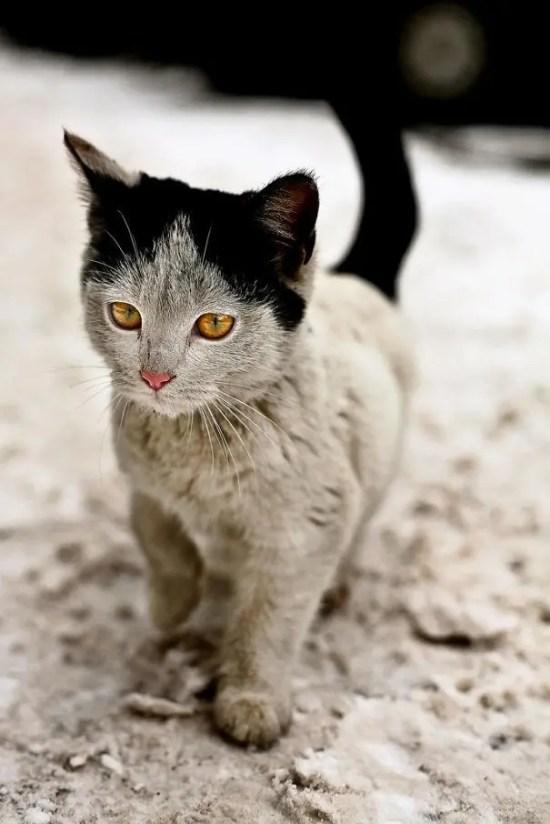 cat-markings-9 (1)