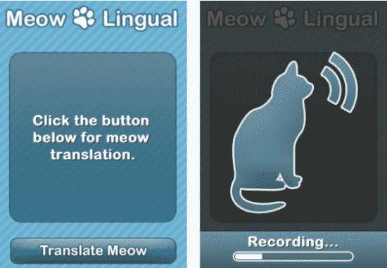Strangest Pet Accessories
