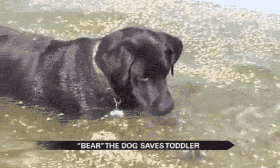 5 Hero Dogs Lassie would be Proud of3